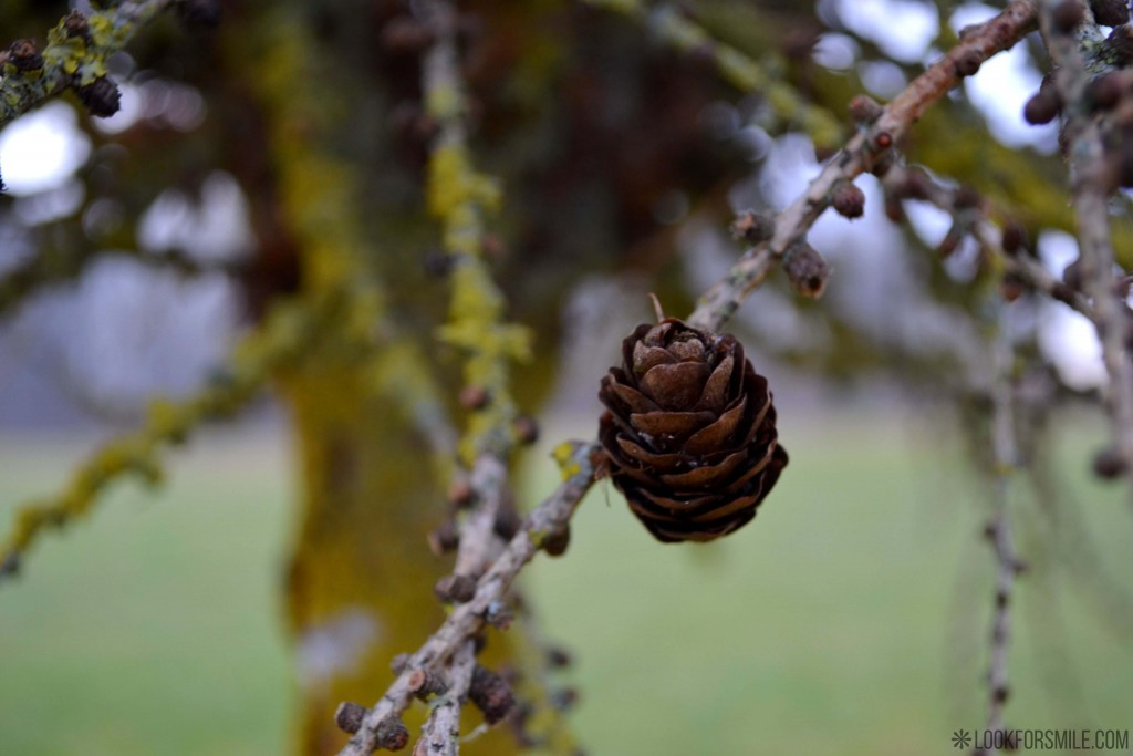 nature cone - blog - Lookforsmile.com