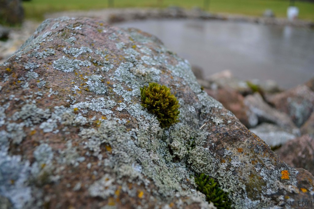 Moss nature - blog - Lookforsmile.com