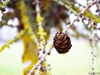 Nature pinecone - blog - Lookforsmile.com