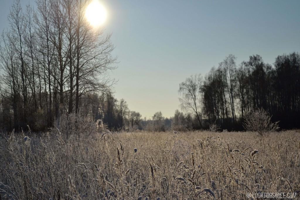 Ziema, pļava, sniegs - blogs - Lookforsmile.com