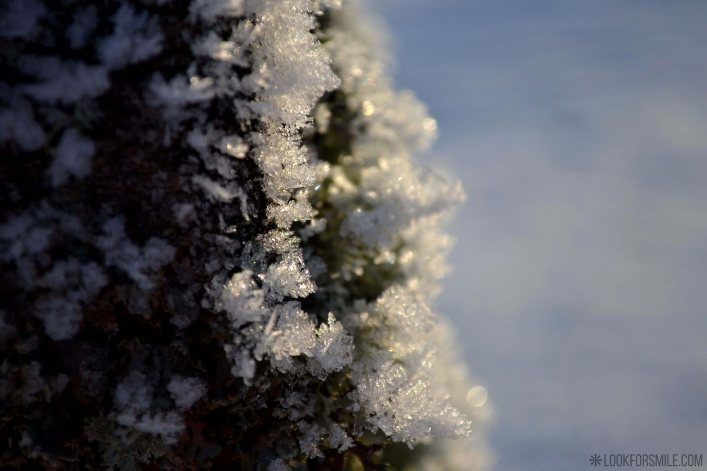 Snow closeup, winter, nature - blog - Lookforsmile.com