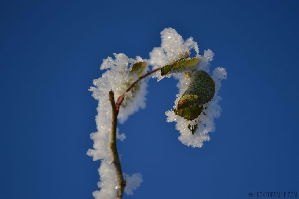 green leaf with snow and blue sky, winter - blog - Lookforsmile.com