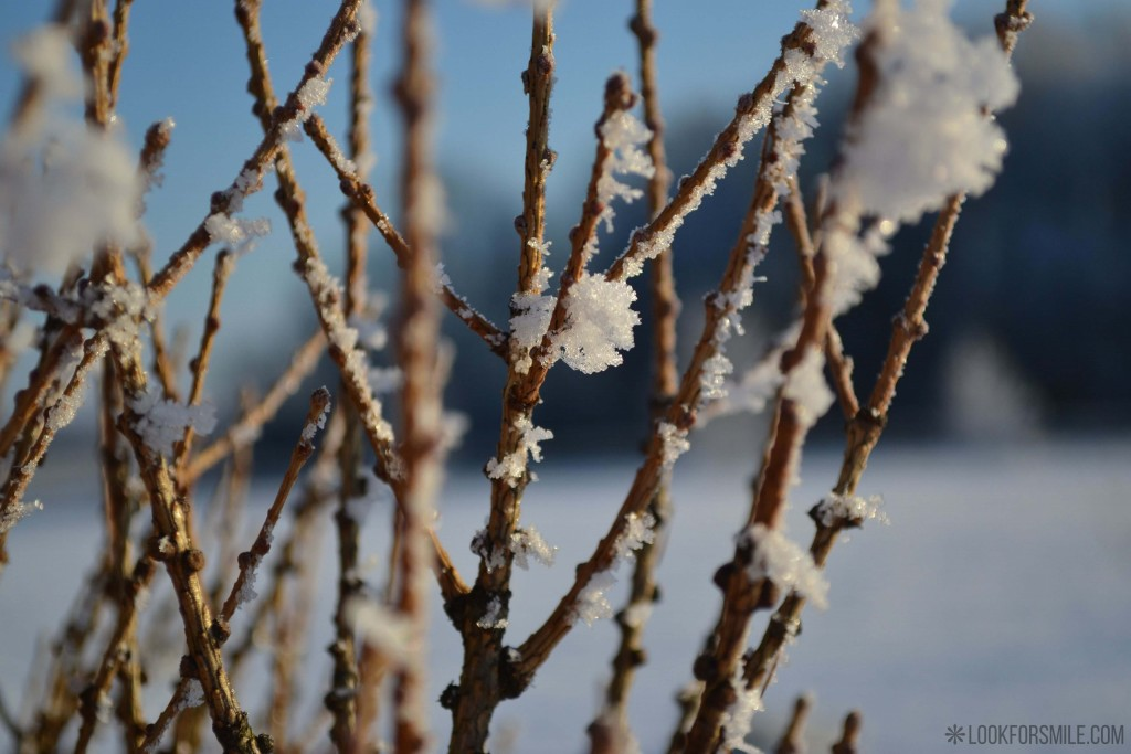 branches, twigs in snow, winter, nature - blog - Lookforsmile.com