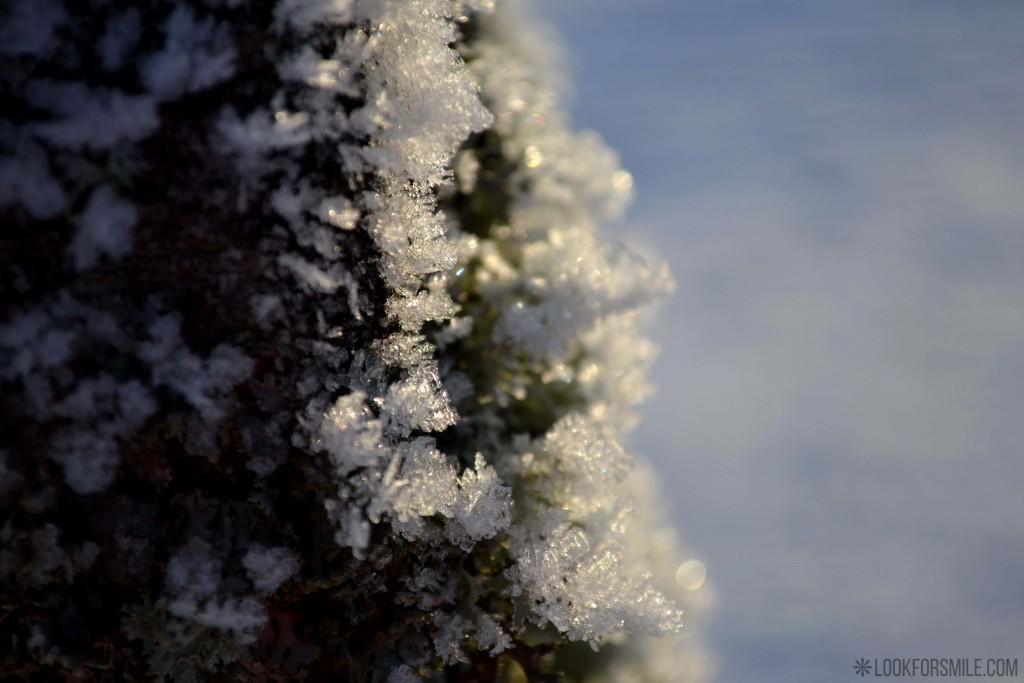 sniegs, ķērpji, ziema - blogs - Lookforsmile.com