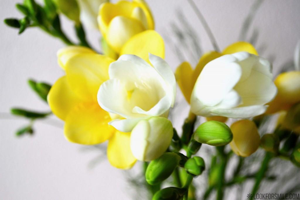 dzimšanas diena, frēzijas, vecums - blogs - Lookforsmile.com