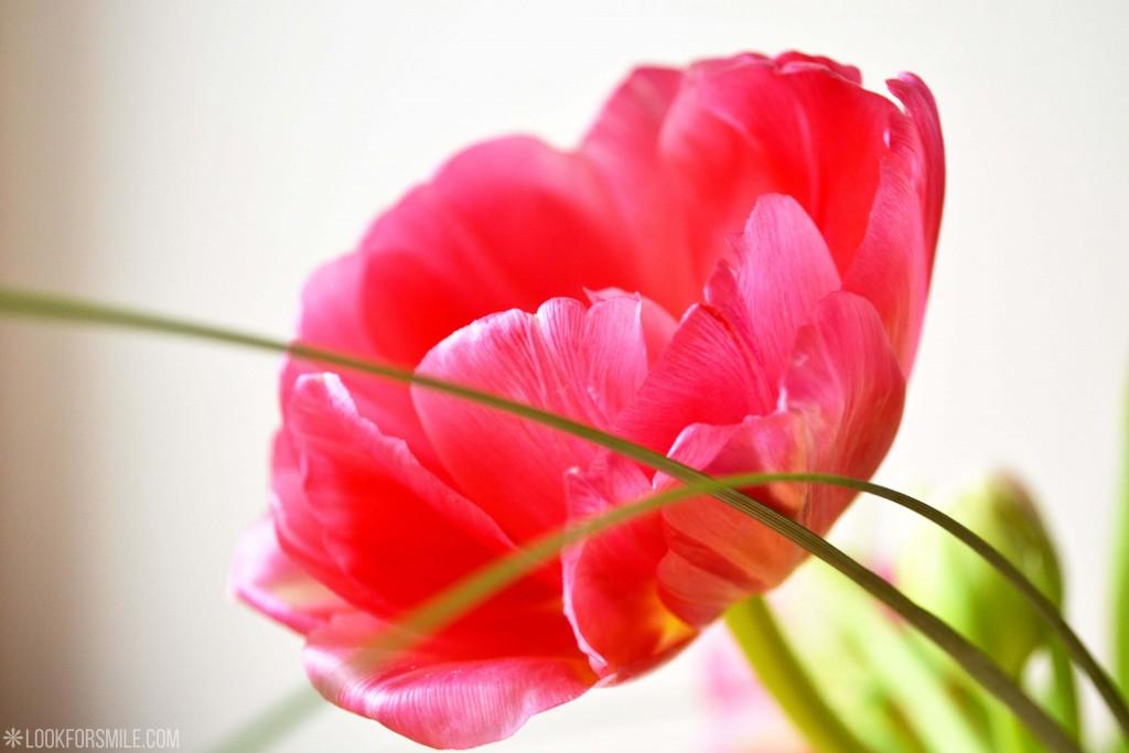 Dzimšanas diena, novecošana, tulpe - blogs - Lookforsmile.com