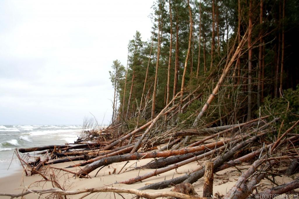 Carnikavas jūrmala, Baltijas jūra, priedes - blogs - Lookforsmile.com