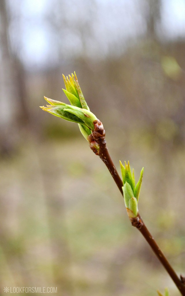 bud, spring, nature photos - blog - Lookforsmile.com