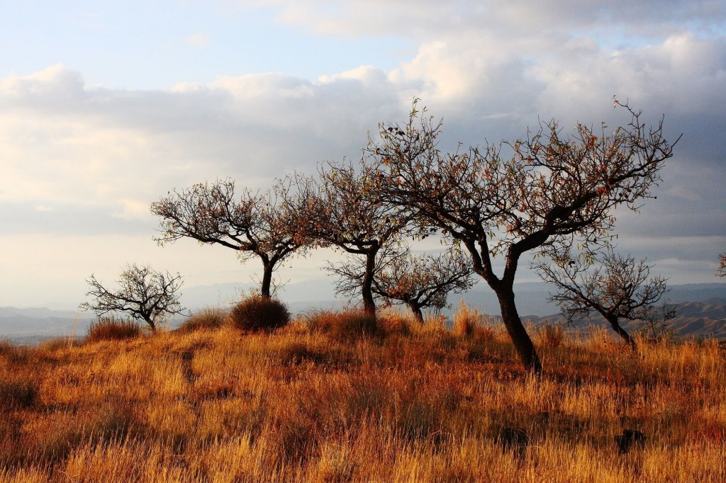 savannah beautiful eco life - blog - Lookforsmile.com