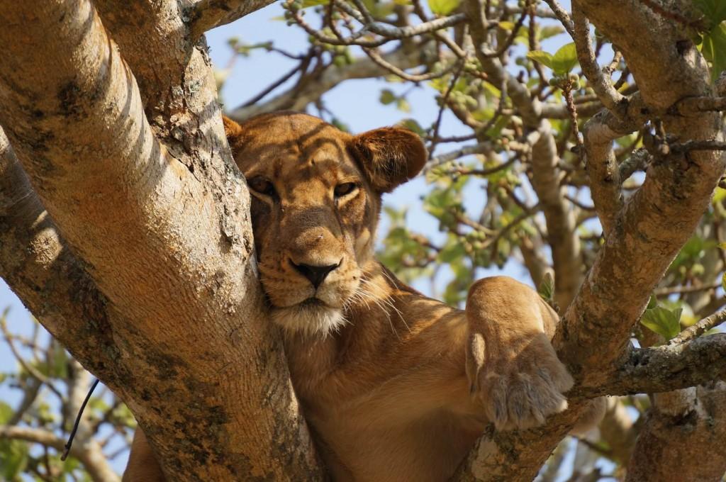 chilled lion zero waste - blog - Lookforsmile.com