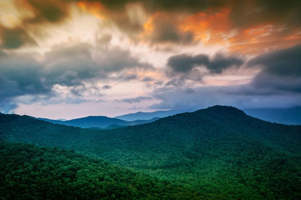 rainforest eco-friendly - blog - Lookforsmile.com
