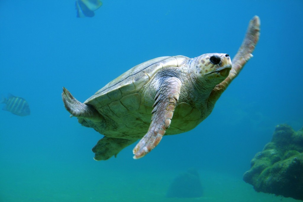 turtle sea zero waste - blog - Lookforsmile.com