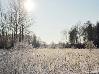 Nature in Winter - blog - Lookforsmile.com